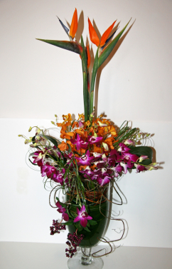 Orchids and Birds