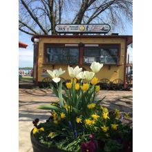 springtimetrolley.jpg