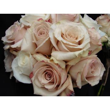 Sahara Rose