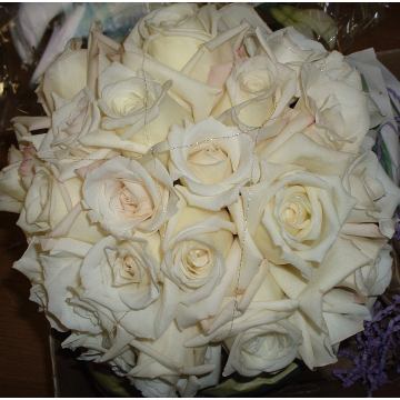 Cream Colored Roses