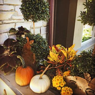 Transitioning into Autumn